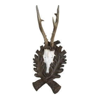 Roe Deer Wall Mount For Sale