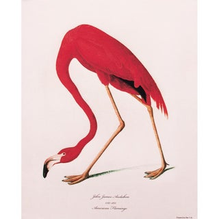 American Flamingo by John James Audubon, Large Reproduction Print For Sale