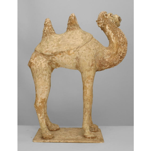 Asian Chinese (Tang Dynasty) unglazed pottery camel with an open mouth and head turned with a double hump back
