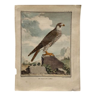 18th Century French Bird Engraving Signed by Jacques De Sève Featuring a Falcon For Sale