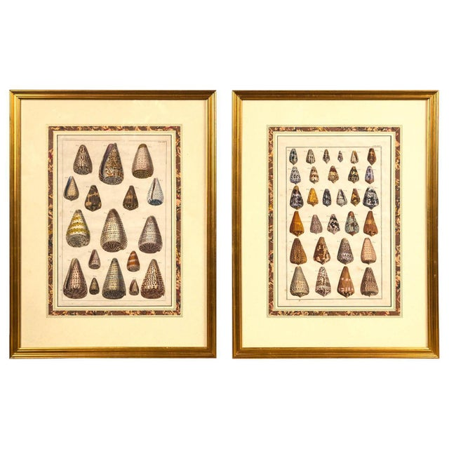 Pair of Framed Hand-Colored Lithographs of Shell Species, 19th Century For Sale - Image 11 of 11
