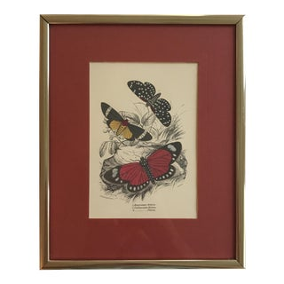 Vintage Butterfly Art Print For Sale