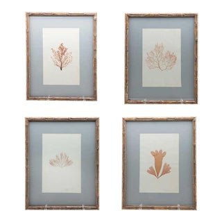 "Framed and Pressed French Alguier 'Herbier' ""Pressed Seaweed"" Specimens - Set of 4 For Sale"