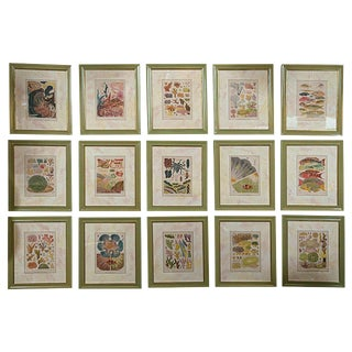 """""""Great Barrier Reef"""" Chromolithographs by W. Saville-Kent - Set of 15 For Sale"""