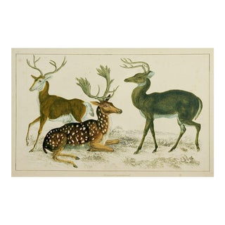 1860's English Traditional Print on Paper of Deer by Fullerton Co