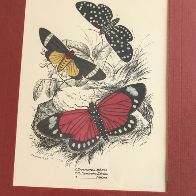Boho Chic Vintage Butterfly Art Print For Sale - Image 3 of 7