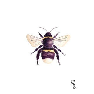 Bumblebee Watercolor Print For Sale
