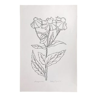 """Original Vintage 1978 Black and White Botanical """"Sneezeweed"""" Drawing Unframed on Paper Signed Betsey Tryon For Sale"""