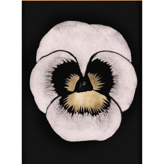 "Contemporary Modern ""Pansies 2"" Print by Natural Curiosities For Sale - Image 3 of 9"