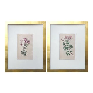 Original Antique Curtis Pink Floral Botanical Etchings C. 1796 - a Pair For Sale