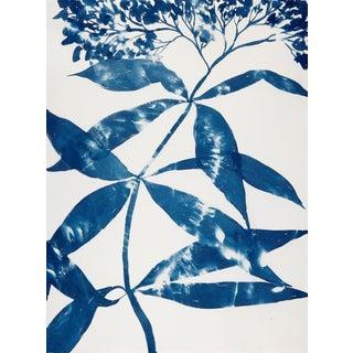 """Boneset"" Botanical Blue Cyanotype Artwork on Paper For Sale"