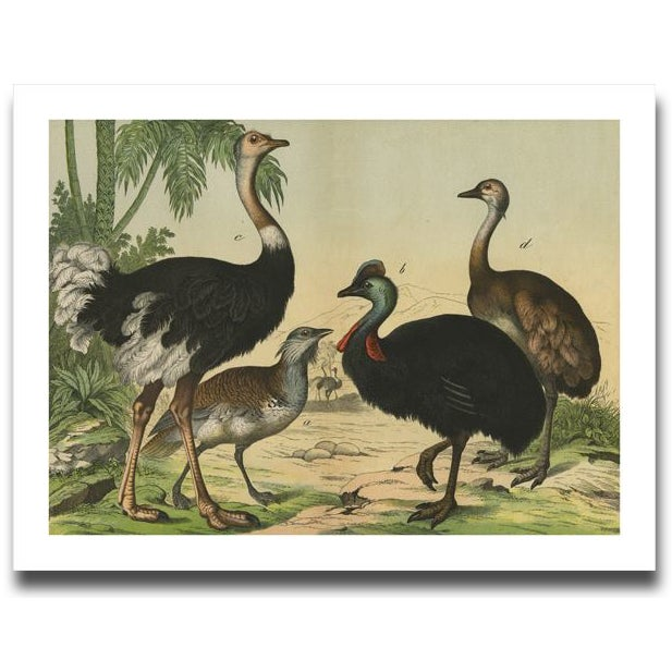 Country Vintage Ostrich & Friends Archival Print For Sale - Image 3 of 5