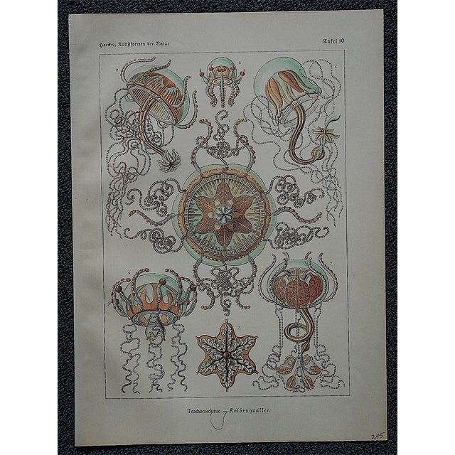 Sea Creatures Lithograph by Ernst Haeckel - Image 3 of 3