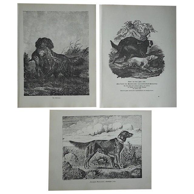 Antique Hunting Dog Engravings - Set of 3 For Sale