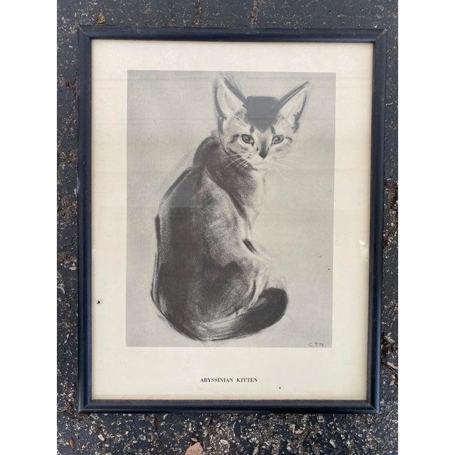 Abyssinian Kitten Framed Illustration For Sale In Milwaukee - Image 6 of 6