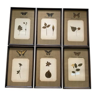 Late 20th Century Butterfly Prints, Framed - Set of 6 For Sale