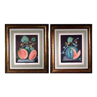 George Brookshaw Engravings of Melons, Plates 66 & 67, From 'Pomona Britannica', Dated 1812. For Sale