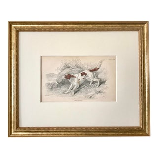 Antique Dog Print English Setter by Sir William Jardine London 1854 For Sale