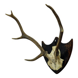 Antique Black Forest Deer Trophy From Salem - Germany, Kuchel 1873 For Sale