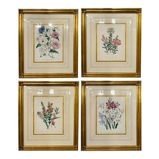 19th Century Botanical Prints Attributed to Mrs. Loudon - Set of 4, Framed For Sale