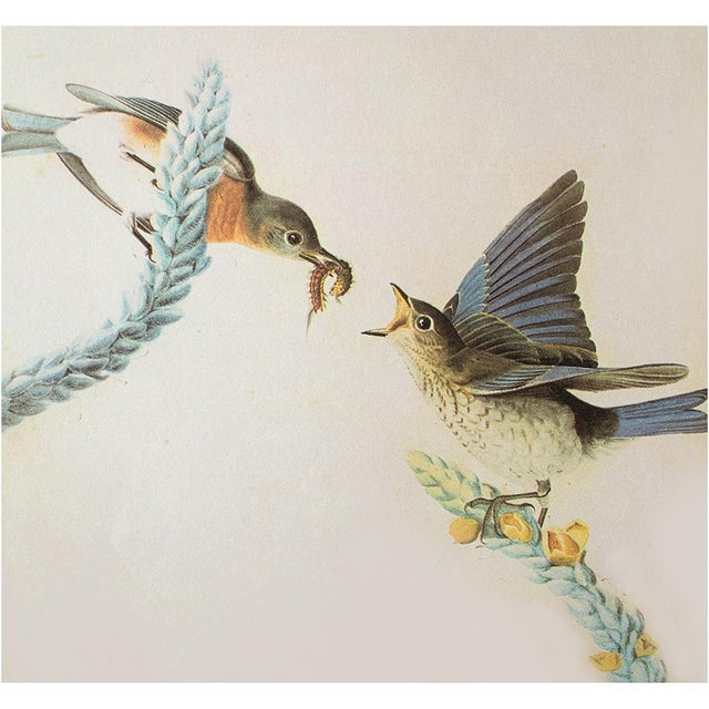 John James Audubon Eastern Bluebird by John James Audubon, Vintage Cottage Print For Sale - Image 4 of 8