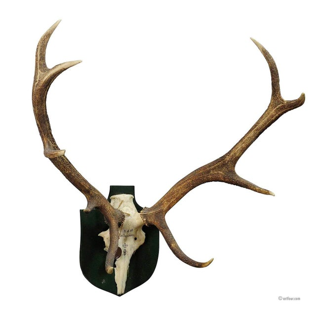 Antique Black Forest Deer Trophy From Salem - Germany, Kaltenbronn 1932 For Sale - Image 4 of 4