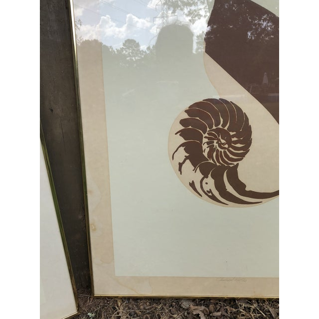 Brown Vintage Van Guard Studio Nautilus Shell Lithographs - a Pair For Sale - Image 8 of 9