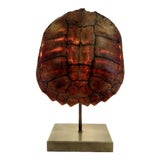 Image of Turtle Shell Table Lamp For Sale