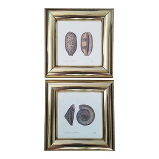 Brass Framed Numbered Seashell Prints, a Pair For Sale
