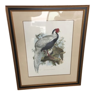 Elliot Collection After Josef Wolf Framed Silver Pheasant Lithograph For Sale