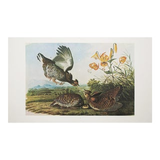 1960s Cottage Style Lithograph of a Pinnated Grouse by John James Audubon