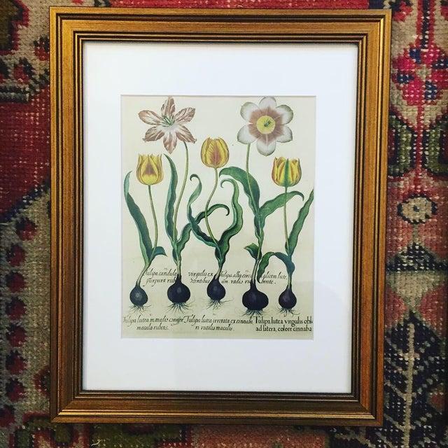 Traditional Taschen Botanical Framed Prints - Set of 3 For Sale - Image 3 of 6
