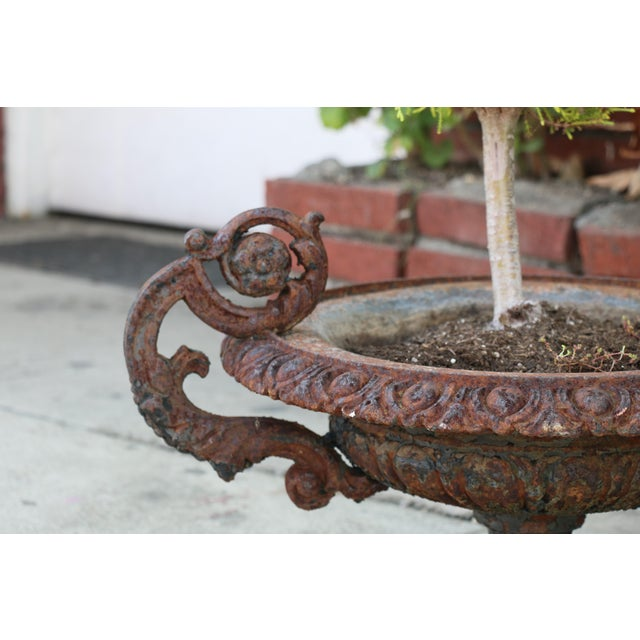 Antique Victorian 1920's Pair of Cast Iron Urns For Sale - Image 11 of 13