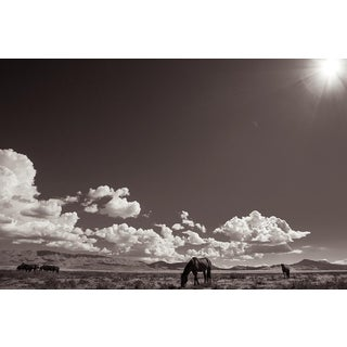 Kimerlee Curyl, Desert Sanctuary, 2013 For Sale