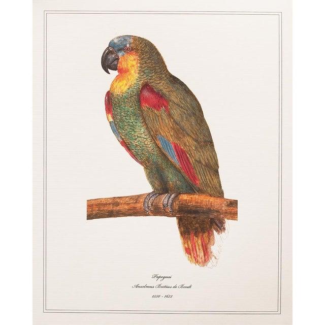 1590s Anselmus Boëtius De Boodt, Parrot Print Set of 9 For Sale - Image 4 of 13