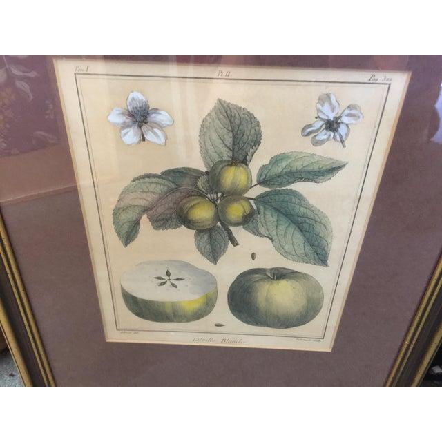 Green Antique Botanical Prints - Set of 3 For Sale - Image 8 of 9