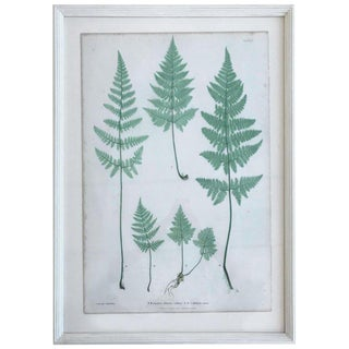 19th Century Bradbury and Evans Nature Printed Fern Print For Sale
