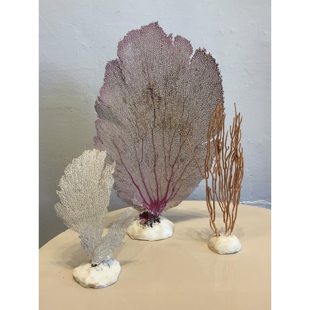 Vintage Grouping of Sea Fans - Set of 6 - Image 4 of 4