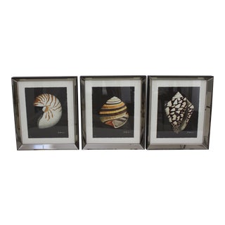 Vintage John Matthew Moore Limited Edition Shell Prints in Custom Mirror Frames - a Set of 3 For Sale