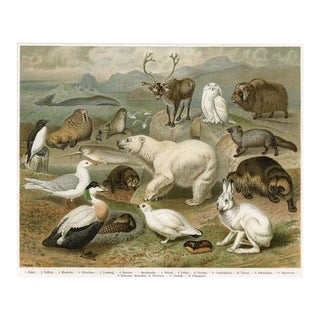 Arctic Animal Print, 1890s Lithograph For Sale