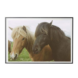 """Jeaneen Lund """"Duo (Two Horses)"""" Unframed Photographic Print For Sale"""