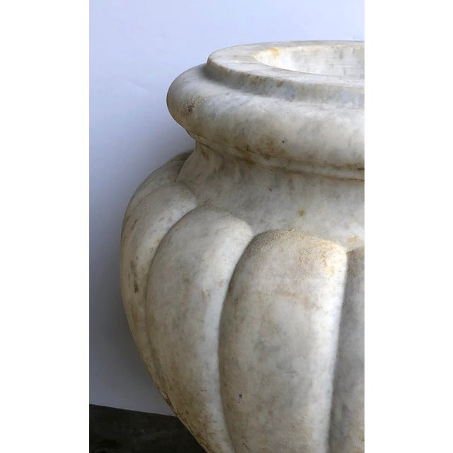 Neoclassical A Large and Refined Pair of Italian Neoclassical Style Carved Carrera Marble Lobed Urns For Sale - Image 3 of 5
