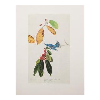 1966 Audubon Azure Warbler Lithograph