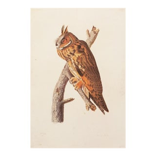 1966 Long-Eared Owl by Audubon Lithograph