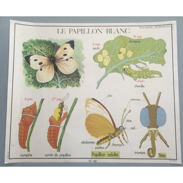Vintage French Hen & Egg Poster - Image 6 of 6