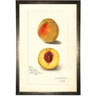 Peach Study in Pewter Shadowbox 17x25 For Sale