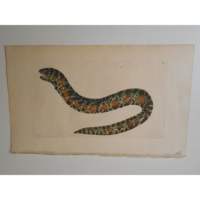 Sea Creature Antique English Engraving - Image 2 of 3