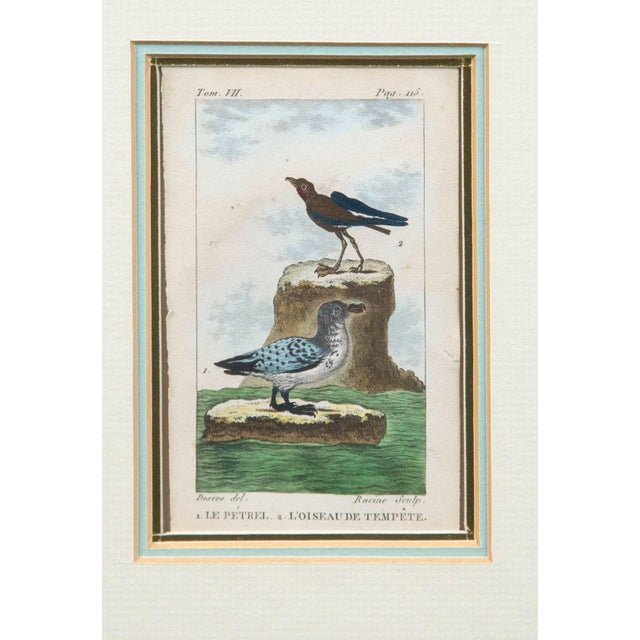French Antique French Engraving of Birds, Paris, Late 18th Century For Sale - Image 3 of 5