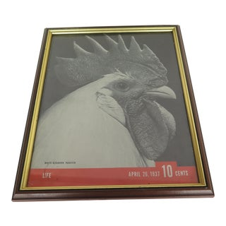 "1937 Original Life Magazine Framed Cover of ""Leghorn"" Rooster"
