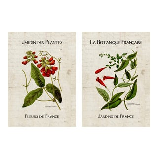 Botanical French Posters - Set of 2 For Sale